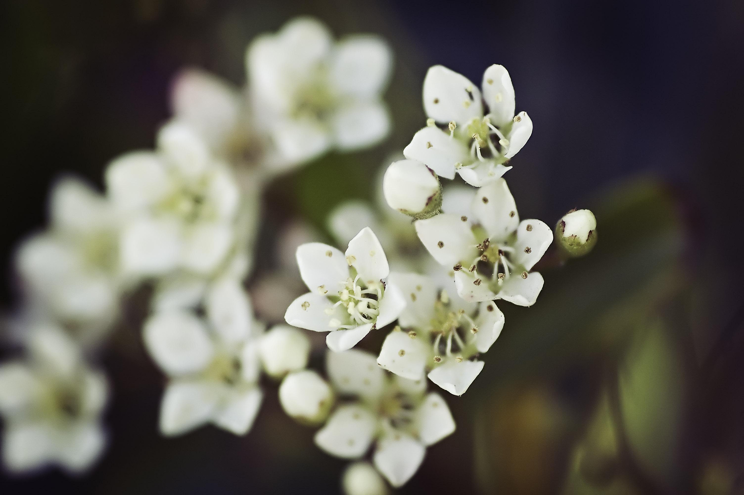 Teeny Tiny Flowers Healthskills Blog