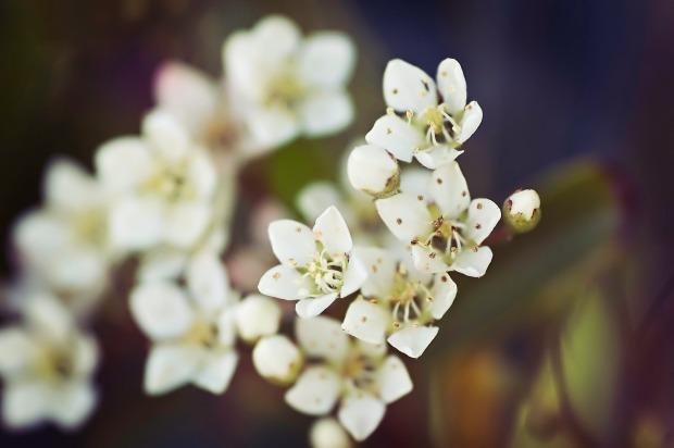 teeny-tiny-flowers
