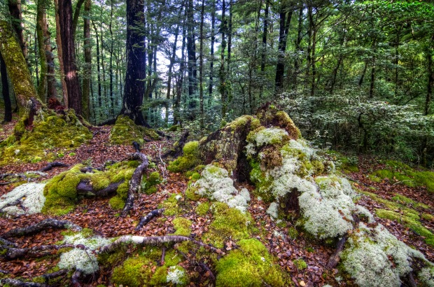 beech forest hdr