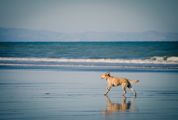The joy of running flat out along the beach - is there anything more freeing?!