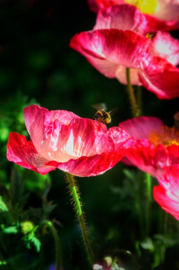 bee & poppy